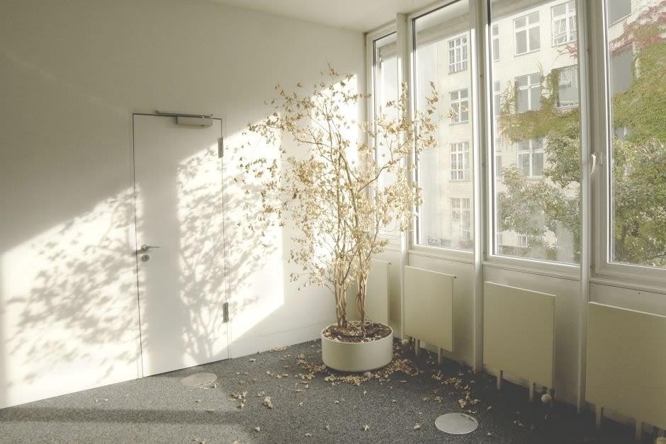 vertrockneter Baum im leeren Büro