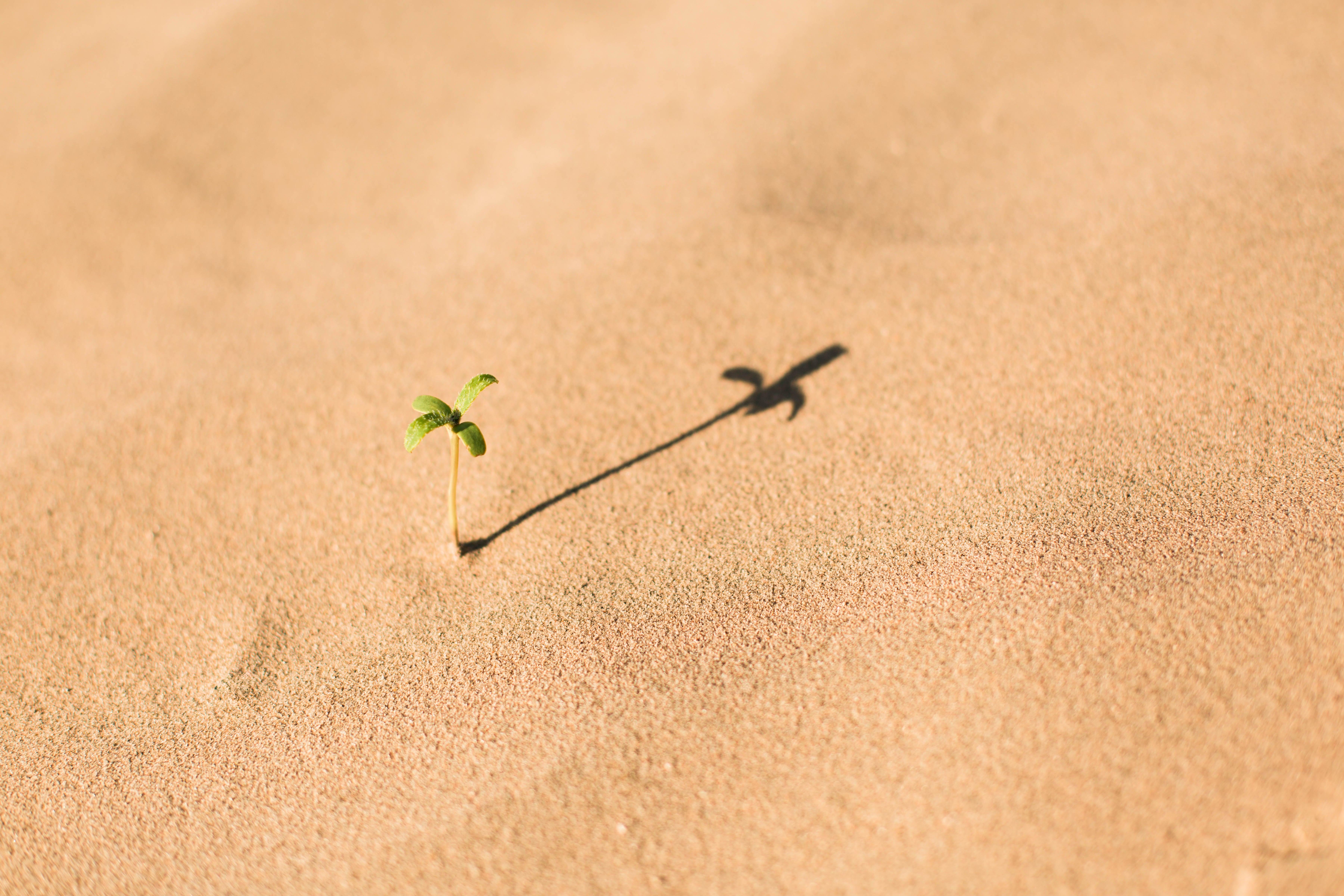 Fresh growth in barren desert