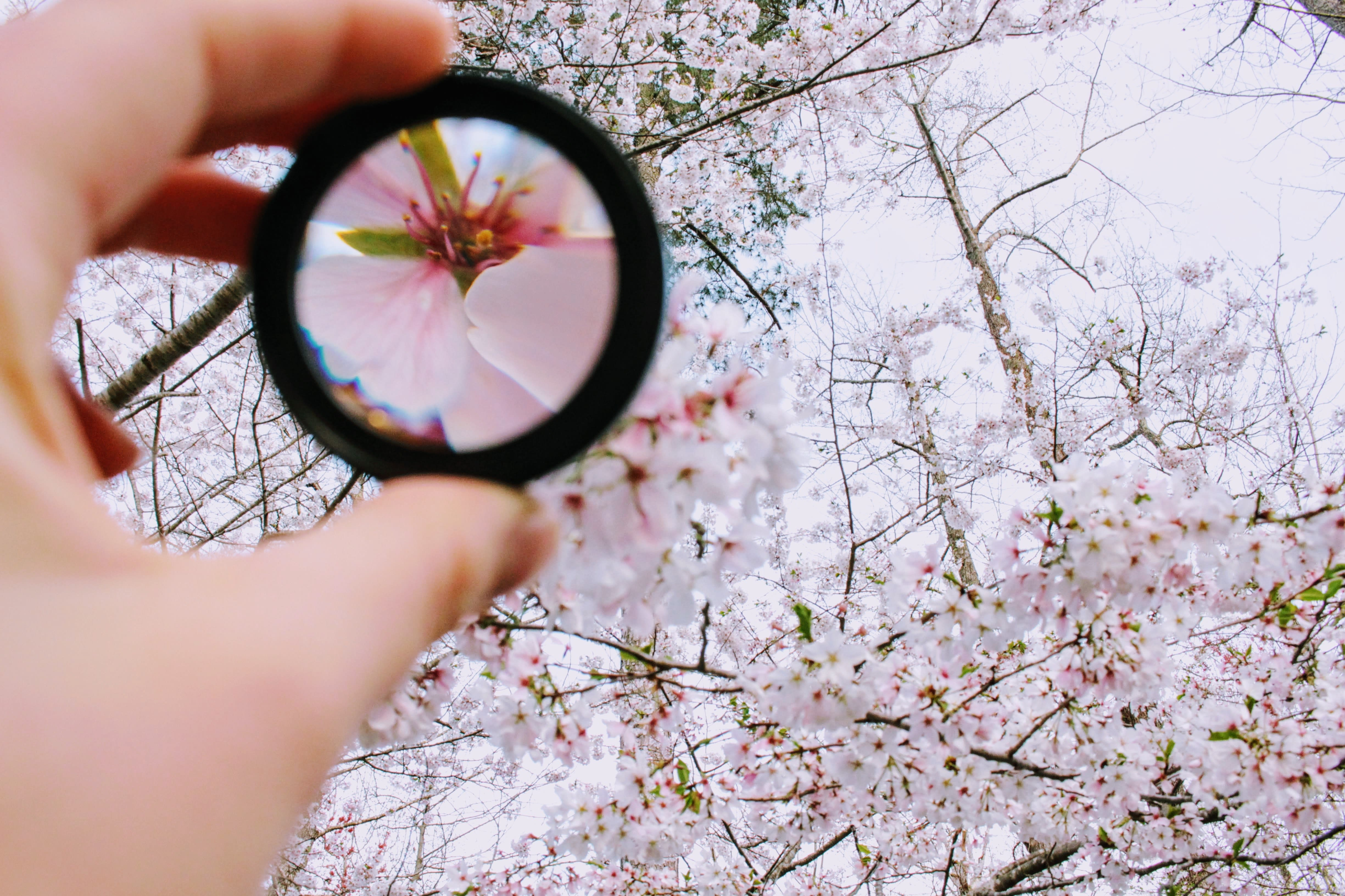 Magnifying glass on a blossom