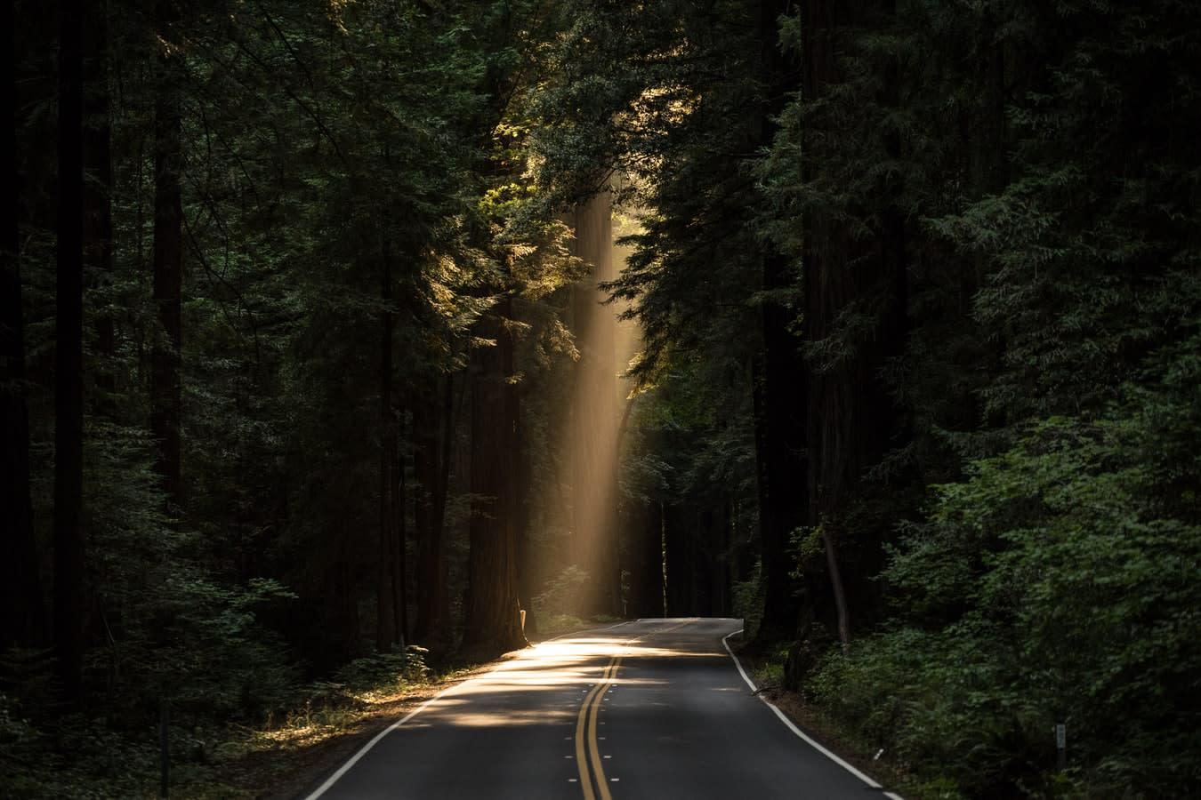 Sentiero illuminato dai raggi del sole